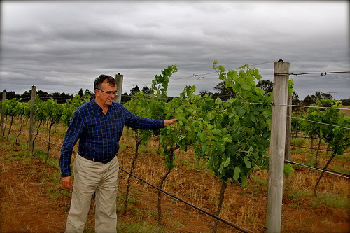 Ross McDonald - Inspecting the Vines