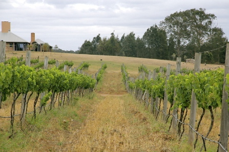 Drip Irrigation at Macquariedale Wines.