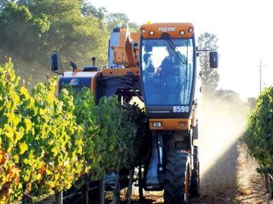 Machine Harvesting...