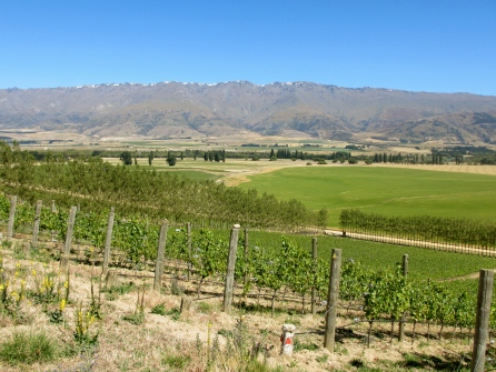 Quartz Reef Vineyard - Central Otago