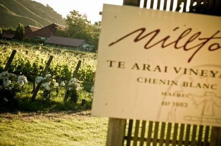 Millton Te Arai Vineyard