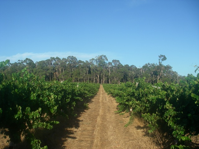 Si Vintners, Rosa Glen - Margaret River - photo by Christina Pickard (used with permission)