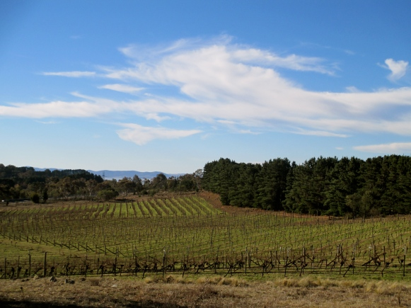 Lark Hill Winery - Photo by The Wine Idealist