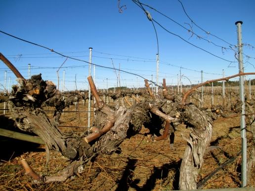 Clonakilla Shiraz - Photo by The Wine Idealist