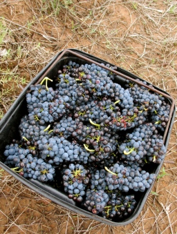 Natural Wine Rules – Cheers! 2015 –