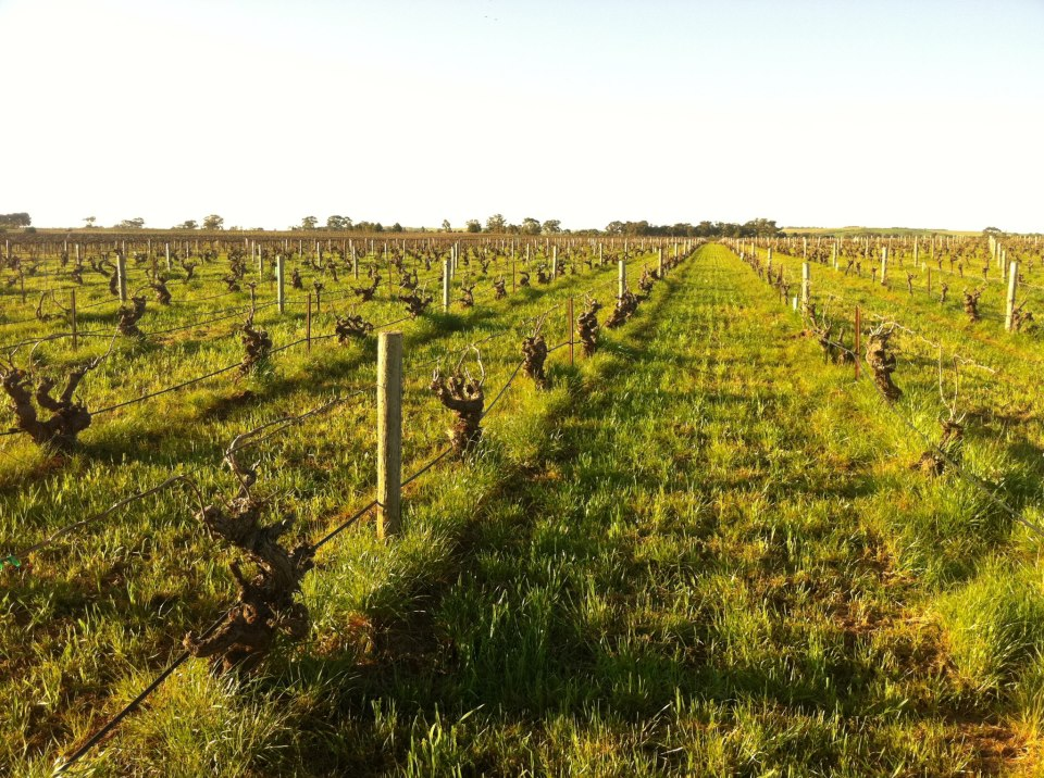 Fraser's Patch- Dallwitz Vineyard - Photo courtesy of Sami-Odi