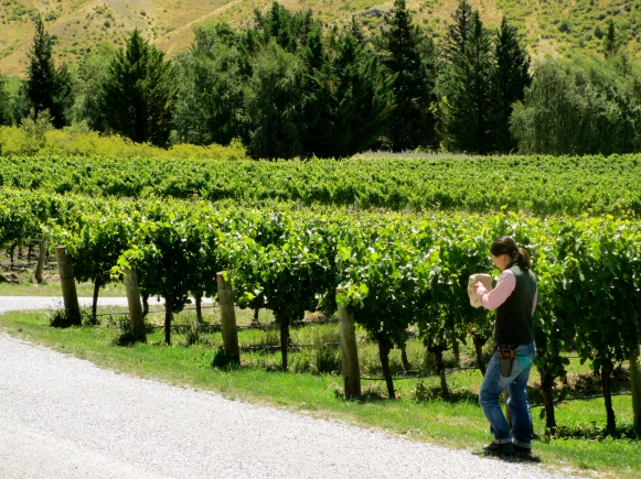 Felton Road, Elms Vineyard - photo by The Wine Idealist