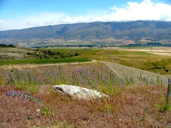 Beautiful Marlborough - photo courtesy of Rock Ferry