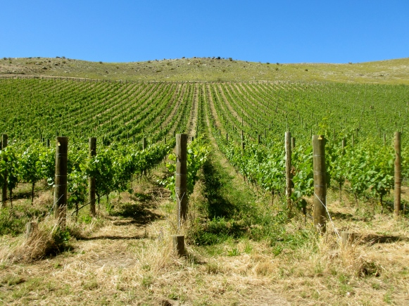Quartz Reef - Bendigo Biodynamic Vineyard - Central Otago