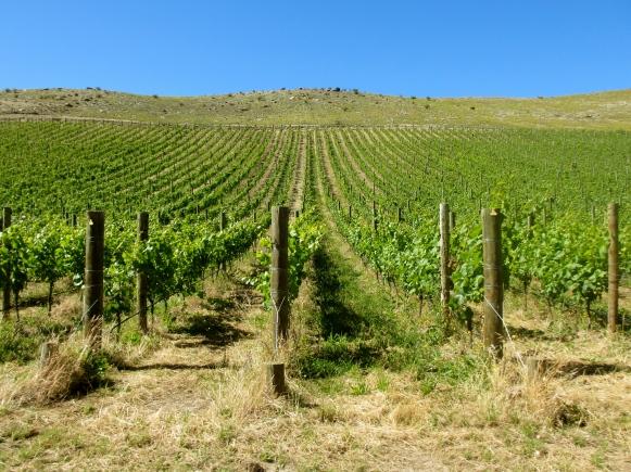 Quartz Reef - Bendigo Biodynamic Vineyard - Central Otago