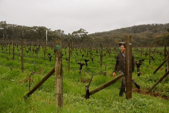 Barry Morey, Sorrenberg Vineyards - photo by The Wine Idealist