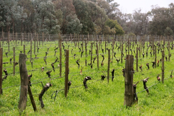 Greenscape - Sorrenberg Vineyard - photo by The Wine Idealist