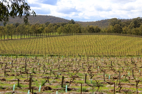 Contrasting Vineyards - Organic v Conventional - photo by The Wine Idealist