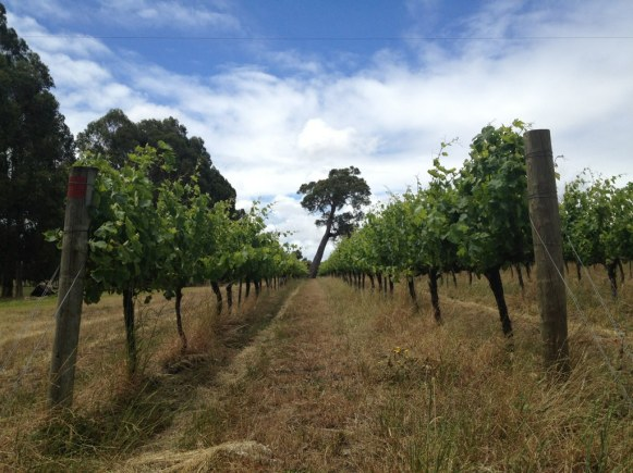 Blind Corner Vineyard - photo courtesy of Ben Gould
