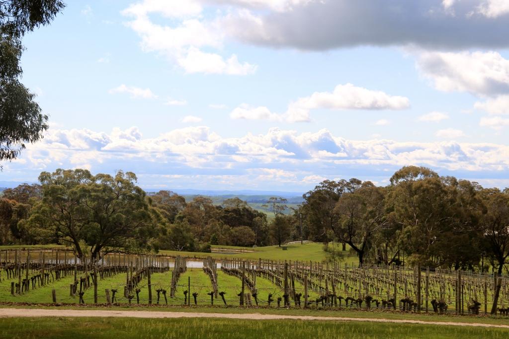 Cobaw Ridge Vineyard - photo by The Wine Idealist