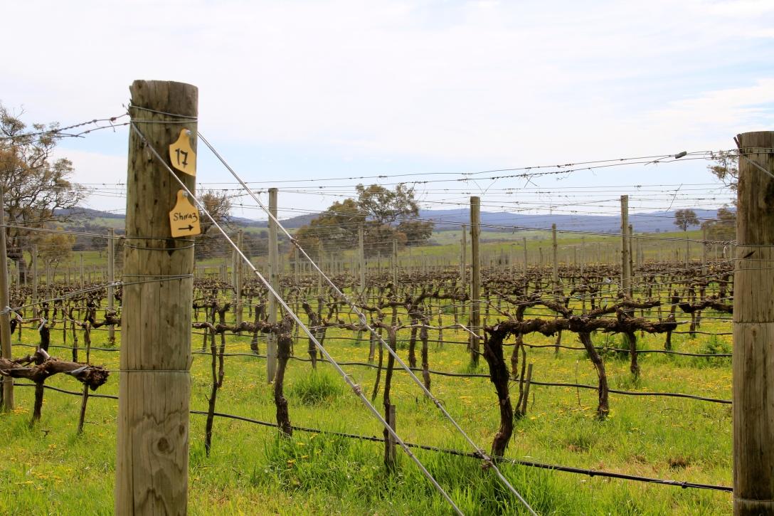 Castagna Genesis - photo by The Wine Idealist