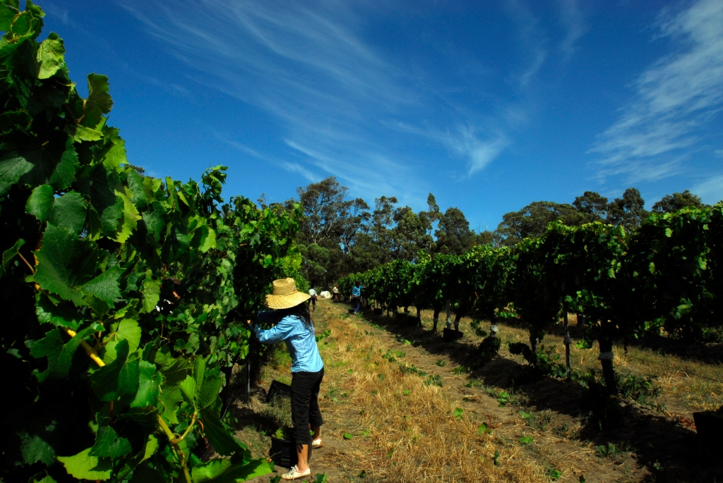 Cullen Vineyards - photo courtesy of Cullen Wines