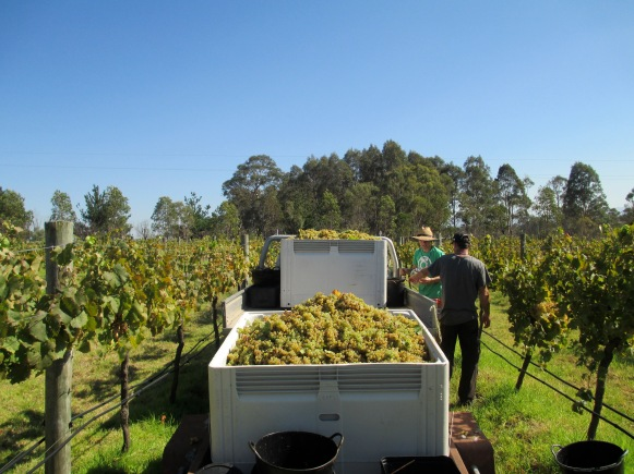 Putting the Fruit on the Ute - photo by The Wine Idealist