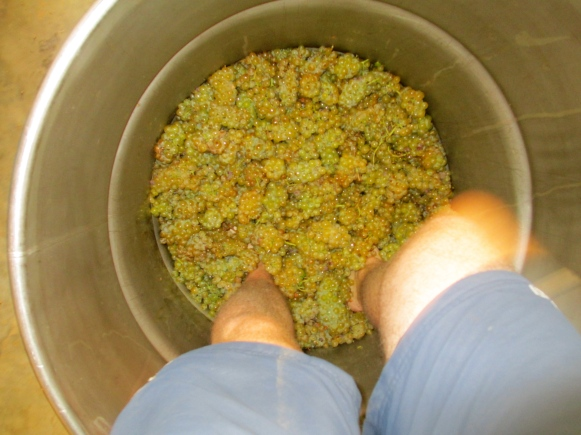 The Field Blend Stomp - photo by The Wine Idealist