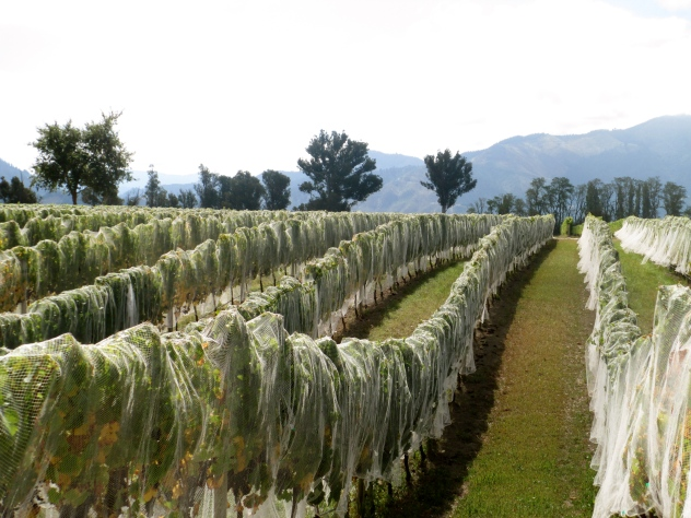 Te Whare Ra Vineyards - photo by The Wine Idealist