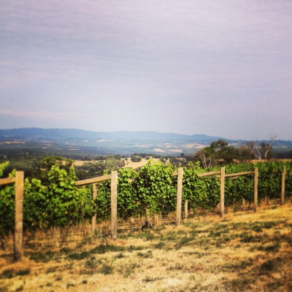 Chapter Home Vineyard, Southern Heathcote - photo courtesy of Chapter Wine
