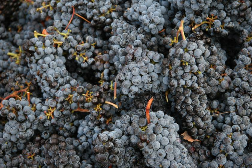 Lazy Cabernet Sauvignon - photo courtesy of Dormilona Wines