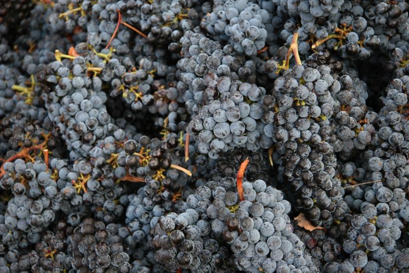 Lazy Cabernet Sauvignon - photo courtesy of Dormilona Wines