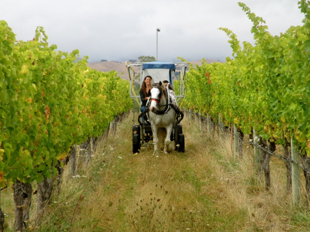 Gracie and Melissa Spraying 508 - photo by The Wine Idealist