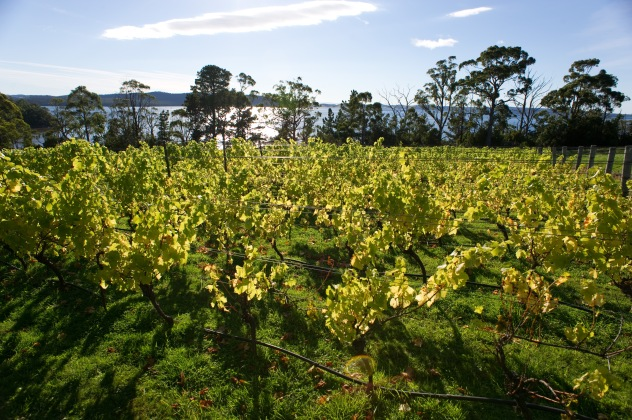 d'meure Vineyards, Birchs Bay, TAS - photo courtesy of Dirk Meure