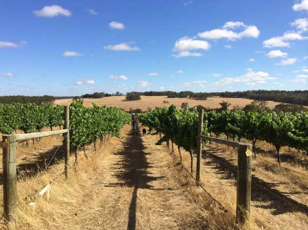 Freehand Vineyard - photo courtesy of Freehand Wines