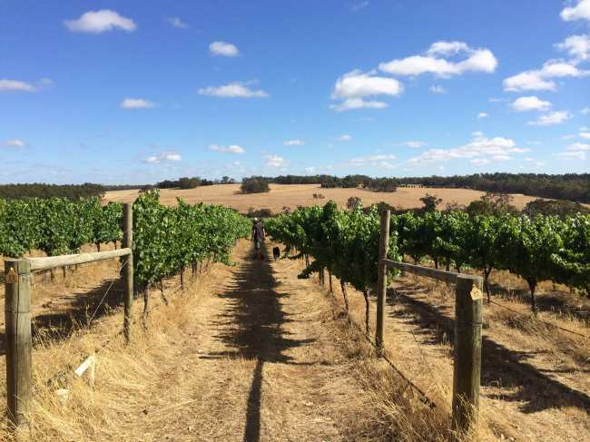 Freehand Vineyard - photo courtesy of Freehand Wines