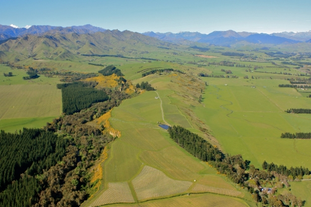 Churton Vineyard, Marlborough - photo courtesy of Churton
