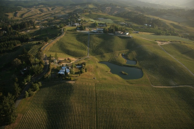 Mahana Vineyard - photo courtesy of Woollaston Estate