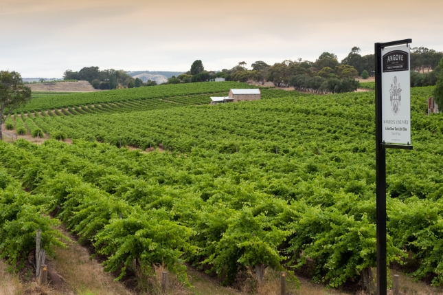 Angove McLaren Vale Vineyard - photo courtesy of Angove