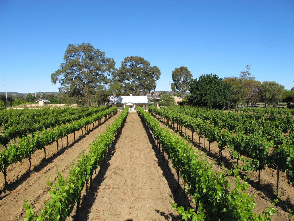 Harris Organic Vineyard - photo courtesy of Harris Organic Wines
