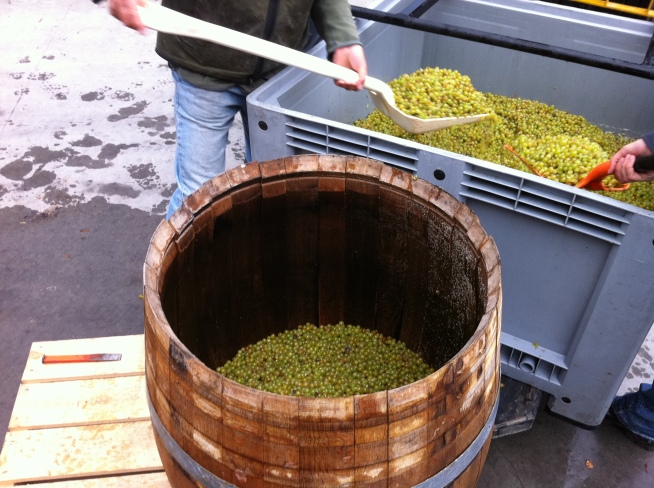 Barrel Ferment - photo courtesy of Mount Edward