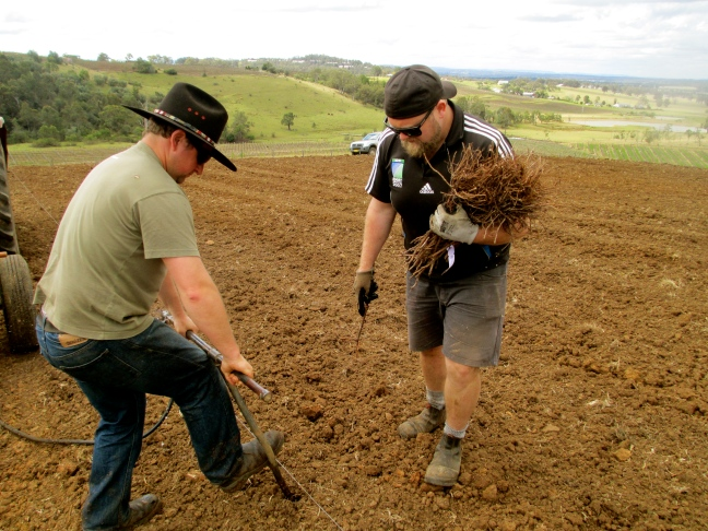 Usher Tinkler and Michael Corbett planting shiraz- photo by The Wine Idealist