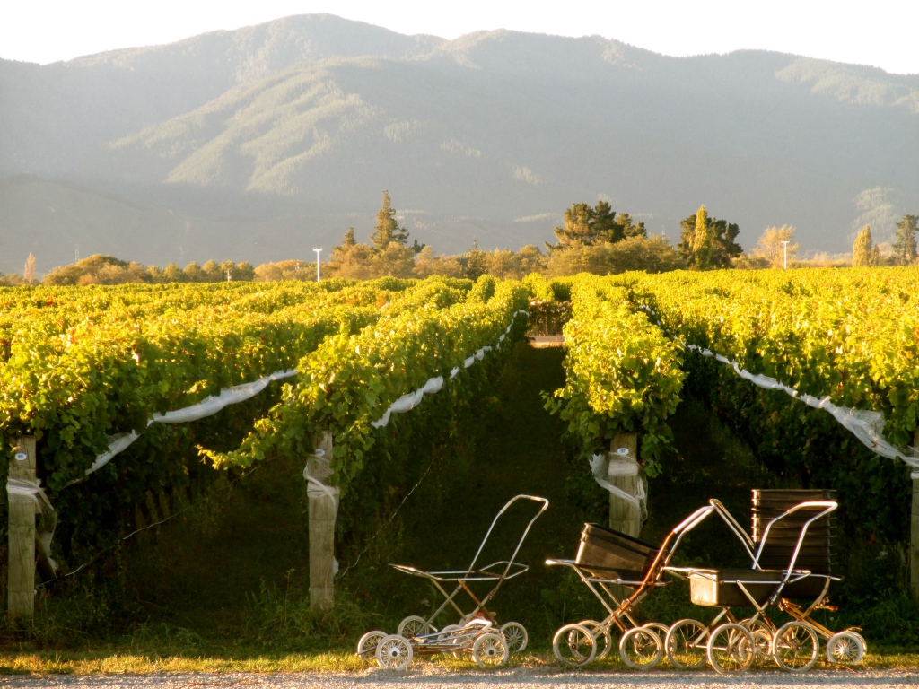 Fromm Grape Prams - photo by The Wine Idealist