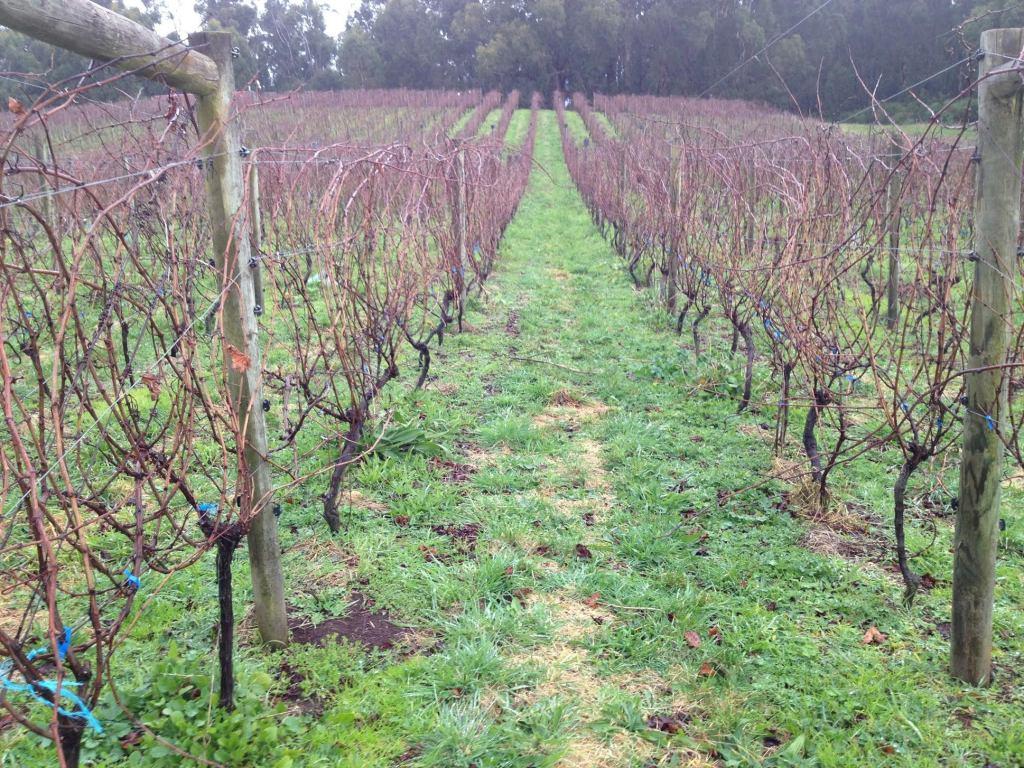 Pruning Begins - photo courtesy of Moondarra Wines