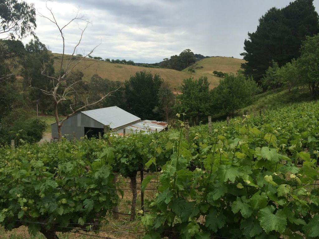 Home of the Gentle Folk - photo courtesy of Gentle Folk Wines
