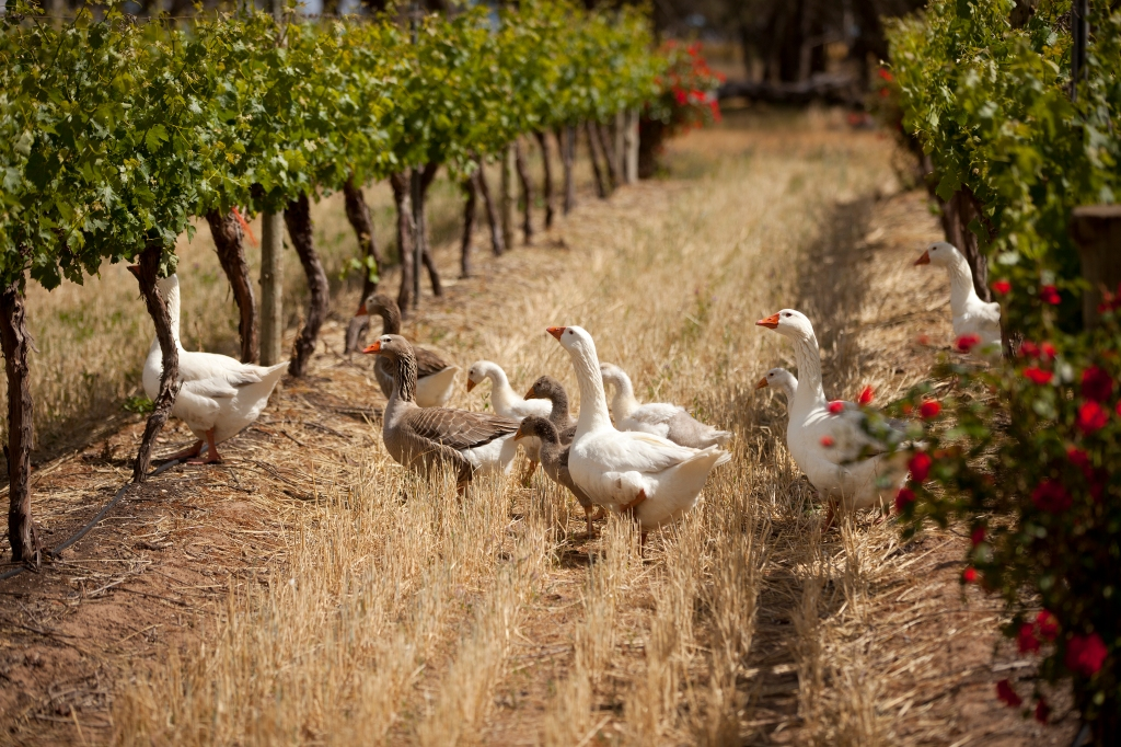 Weed Eaters - photo courtesy of Whistler Wines