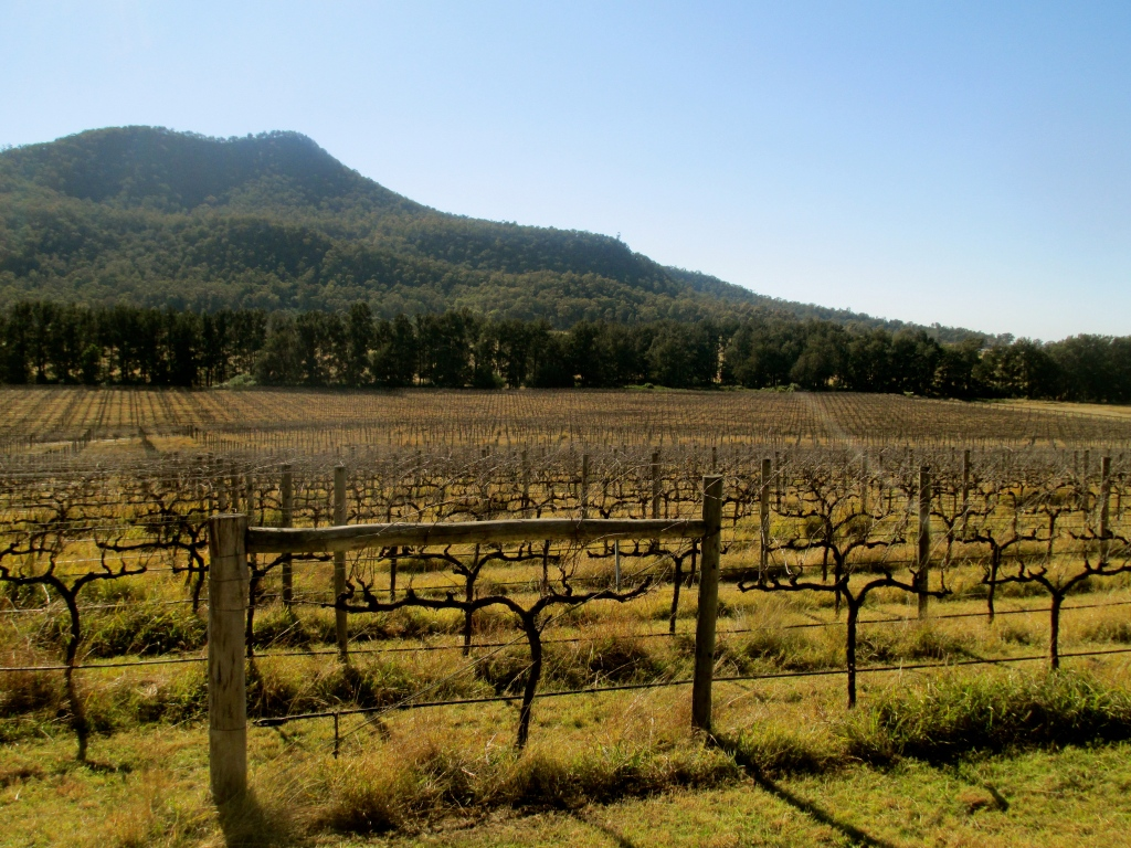 Ascella Vineyard, Broke - photo by The Wine Idealist