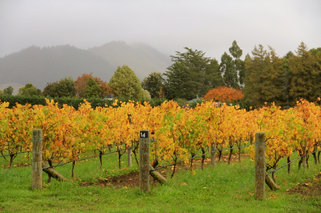 Hope Vineyard - photo by The Wine Idealist
