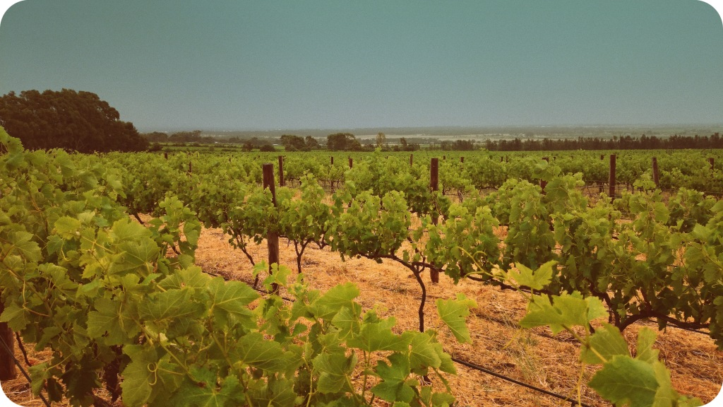 Sellick Hills, McLaren Vale - photo courtesy of The Other Right