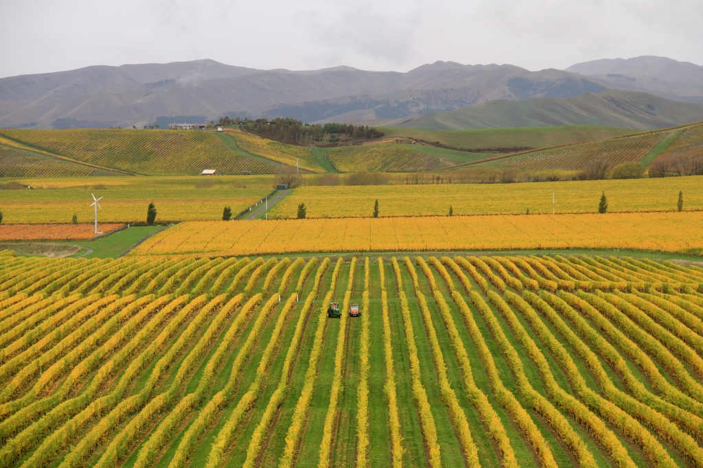 Brancott Estate, Marlborough - photo by The Wine Idealist