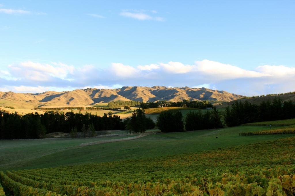 Pyramid Valley, Field of Fire Vineyard - photo by The Wine Idealist
