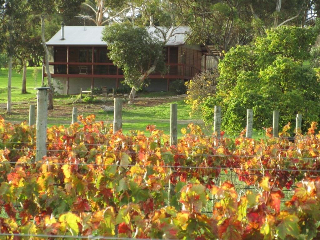 Ivybrook Vineyard - photo courtesy of Ivybrook Farm