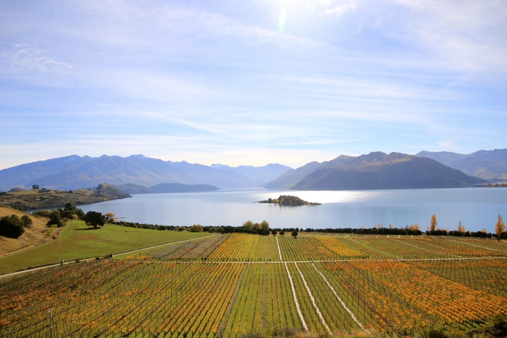 Rippon - photo by The Wine Idealist [Click To Buy!]