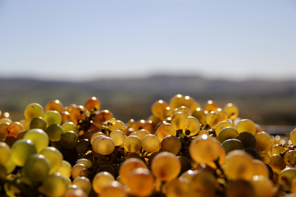 Sunlight Held Together By Water, Greystone Wines, Riesling - photo by The Wine Idealist