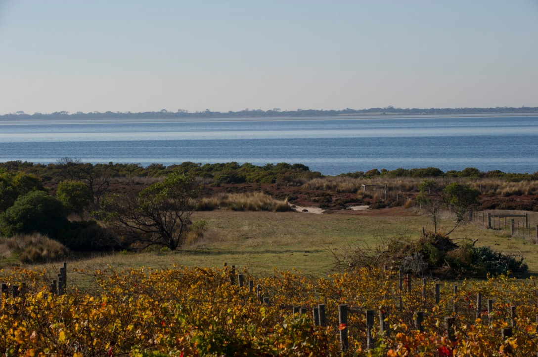 Bellarine Peninsula - photo courtesy of Kiltynane Wines